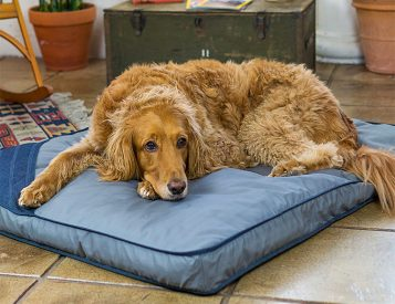 Eco Dog Bed Offers Sustainable Comfort for your 4-Legged Friend