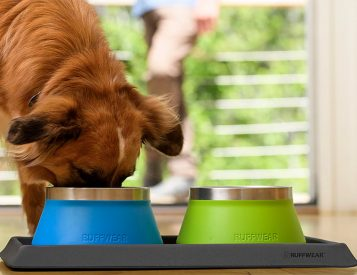 Feed Your 4-Legged Friend from a Basecamp Bowl