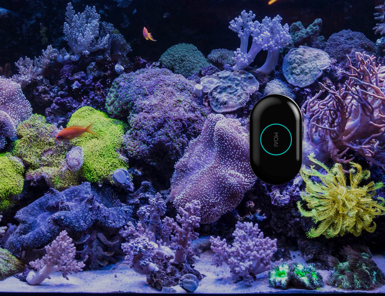 We Found a Robot that Cleans Your Aquarium at werd.com