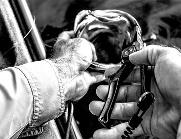 Gerber Goes Fishing