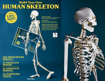Build a Skeleton In Your Spare Time