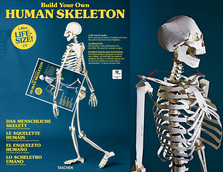 Build a Skeleton In Your Spare Time at werd.com
