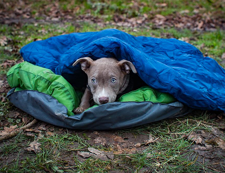 With the DoggyBag, Your Pooch will Camp in Comfort at werd.com